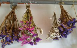 Bunches of statice flowers hanging to dry Royalty Free Stock Image