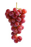 Bunches of Summer fresh red grape. With white isolate background Royalty Free Stock Images