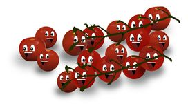 Bunches of tomatoes Stock Photography