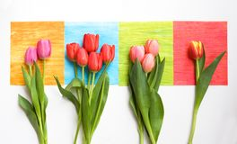 Bunches of tulips on colorful squares Stock Photo