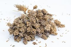 Bunches of very dry Lavender flowers in natural colour - 1. Bunches of very dry Lavender flowers in natural colour - on white background stock image