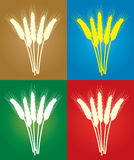 Bunches of wheat ears Stock Photo