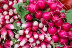 Pink Radishes royalty free stock photos
