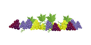 Bunches of Wine Grapes. Bunches of red, white and purple wine grapes with green leaves. Fresh fruit. Vineyard grape icon. Grape icon. Wine grape icon.  object in Stock Photos