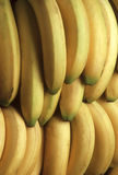 Bunches of yellow bananas Stock Image