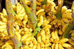 Bunches of yellow bananas Stock Photo