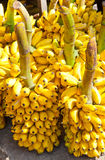 Bunches of yellow bananas Royalty Free Stock Image