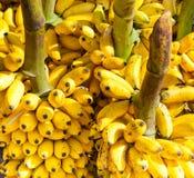 Bunches of yellow bananas Stock Photo
