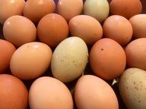 Bundel van Eieren Stock Fotografie