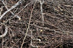 Bundel van gesneden hout Stock Foto's