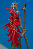 Bundel van Spaanse pepers Stock Fotografie