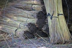 BUNDELS VAN DROOG GRAS DIE VOOR HET MET STRO BEDEKKEN VAN DAKEN WORDEN BESTEMD royalty-vrije stock afbeelding