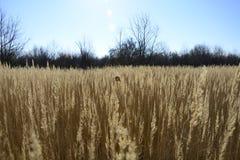 Bundels van gras in de wind Stock Fotografie
