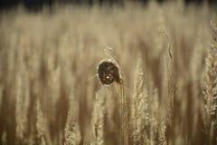 Bundels van gras in de wind Stock Afbeelding