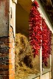 Bundels van hete die peper dichtbij hooi wordt gekrast Royalty-vrije Stock Afbeelding