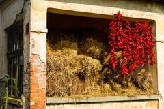 Bundels van hete die peper dichtbij hooi wordt gekrast Stock Fotografie