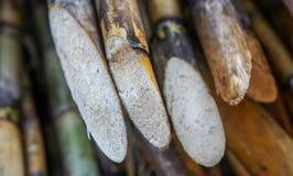 Bundels van suikerriet Stock Foto's