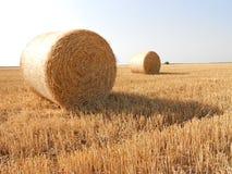 Bundels van tarwe op gebied stock afbeelding