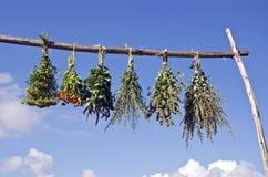 Bundels van verse medische die kruiden worden gehangen om op houten stok te drogen stock afbeeldingen