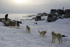 Bunden slädehundkapplöpning i den Kummiut eskimobyn. Arkivbild