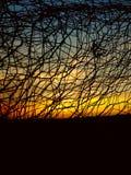 Bunden solnedgång Fotografering för Bildbyråer