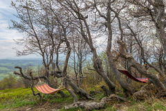 Bundet till en trädhängmatta fotografering för bildbyråer