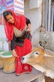 BUNDI, RAGIASTAN, INDIA - 10 DICEMBRE 2017: Una donna che alimenta ad una mucca santa nelle vie fuori di lei negozio Fotografia Stock