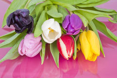Bundle of assorted Dutch Tulips Royalty Free Stock Images