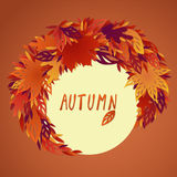 A bundle of bright filigree autumn leaves Royalty Free Stock Photos