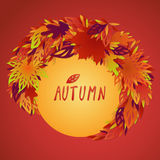 A bundle of bright filigree autumn leaves Stock Image