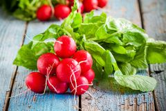 Bundle of bright fresh organic radishes with leaves Stock Photos