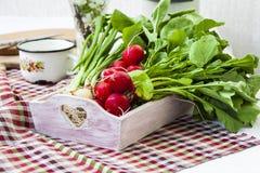 Bundle of  bright fresh organic radishes with leaves Royalty Free Stock Photos
