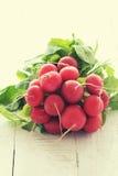 Bundle of bright fresh organic radishes Stock Photography