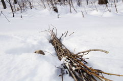 Bundle of a brushwood on a snow. Photo of a brushwood that put together in a bundle Royalty Free Stock Photography
