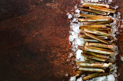 Bundle, bunch of fresh razor clams on ice, dark concrete background. Copy space, top view, banner. Bundle, bunch of fresh razor clams on ice, dark concrete Stock Photography
