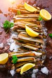 Bundle, bunch of fresh razor clams on ice, dark concrete background, lemon, herbs. Copy space, top view. Royalty Free Stock Photography