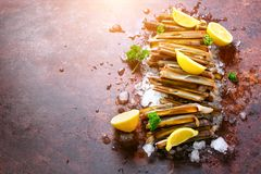 Bundle, bunch of fresh razor clams on ice, dark concrete background, lemon, herbs. Copy space, top view. Stock Images