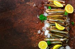 Bundle, bunch of fresh razor clams on ice, dark concrete background, lemon, herbs. Copy space, top view, banner. Stock Photography