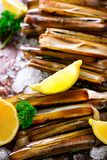 Bundle, bunch of fresh razor clams on ice, dark concrete background, lemon, herbs. Copy space, top view. Royalty Free Stock Images