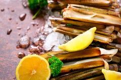 Bundle, bunch of fresh razor clams on ice, dark concrete background, lemon, herbs. Copy space, top view. Stock Image