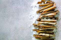 Bundle, bunch of fresh razor clams on ice, grey concrete background. Copy space, top view, banner. Bundle, bunch of fresh razor clams on ice, grey concrete Stock Photography
