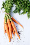 Bundle of carrots Stock Photography
