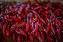 Bundle of Chili Peppers stock photos