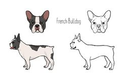 Bundle of colorful and monochrome line drawings of face and full body of French bulldog, front and side views. Small. Companion dog, pet animal of short-haired Stock Photography