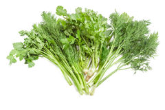 Bundle of dill, coriander and parsley on a light background. Bundle of fresh green dill, coriander and parsley on a light background Stock Photo