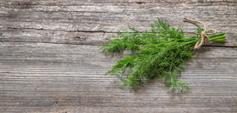 Bundle of dill herb on rustic wooden background. Royalty Free Stock Photos