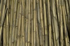 Bundle of dried giant canes. Bundle of dried giant cane,used for roofing and fences, agricultural royalty free stock images