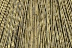 Bundle of dried giant canes. Bundle of dried giant cane,used for roofing and fences, agricultural royalty free stock image