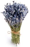 Bundle of dried lavender Royalty Free Stock Photos