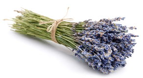 Bundle of dried lavender royalty free stock image